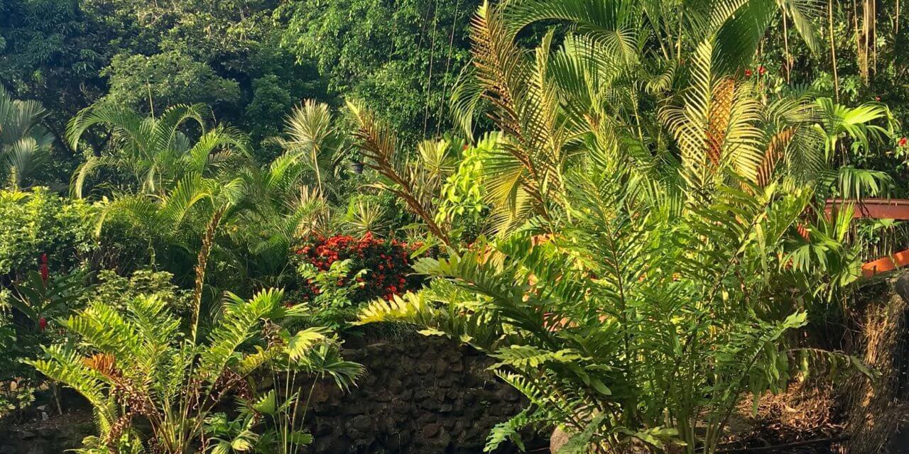 COSTA RICA-2 BY ELLE O'SHEA